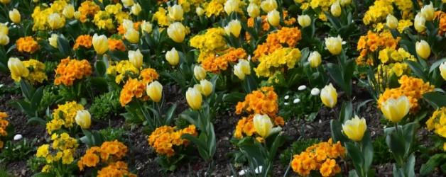le printemps à Bagatelle #2