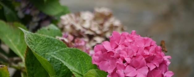 quelques fleurs d'été pour un dimanche d'automne