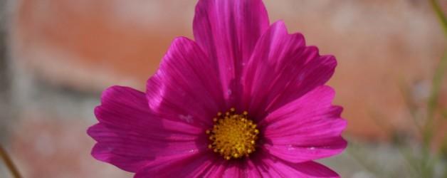 les fleurs de mon été