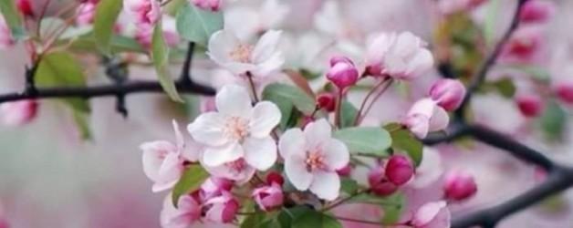 le jeu des couleurs de Dhelicat: # nuances de rose