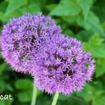 Jardins de Bagatelle, un parfum de fleurs