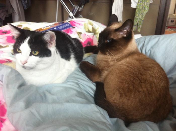 Chronique du dimanche 85 dhelicat - Chat fait pipi sur le lit ...