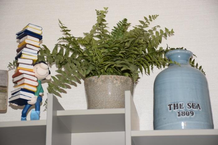 Chronique du dimanche 143 dhelicat for Repousse amaryllis