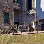 la balade du mercredi: le marché du Rialto