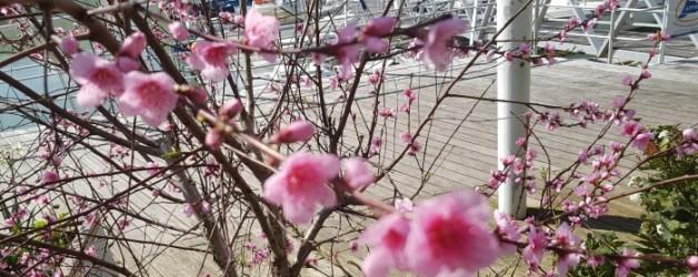 le printemps à Venise